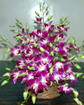 send gifts to bangladesh, send gift to bangladesh, banlgadeshi gifts, bangladeshi Orchid Basket