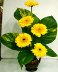 send gifts to bangladesh, send gift to bangladesh, banlgadeshi gifts, bangladeshi Thai Gerbera