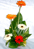 send gifts to bangladesh, send gift to bangladesh, banlgadeshi gifts, bangladeshi Thailand Gerbera