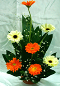 send gifts to bangladesh, send gift to bangladesh, banlgadeshi gifts, bangladeshi China Gerbera