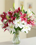 send gifts to bangladesh, send gift to bangladesh, banlgadeshi gifts, bangladeshi Thailand Lily with Vase
