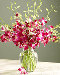 send gifts to bangladesh, send gift to bangladesh, banlgadeshi gifts, bangladeshi Red Orchid + Vase
