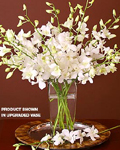 send gifts to bangladesh, send gift to bangladesh, banlgadeshi gifts, bangladeshi White Orchid + Vase